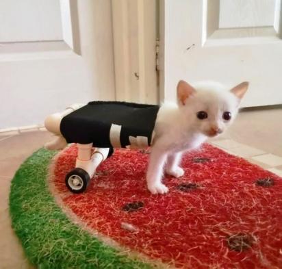 A doença de Angelito fez com que as patas traseiras atrofiassem e ficassem imóveis. (Foto: Reprodução Youtube/Noticias Caracol)