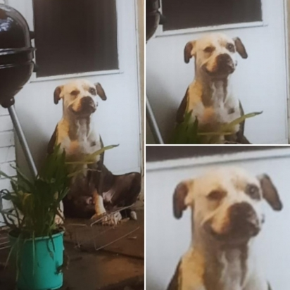 Internauta compartilha foto do seu cachorro tentando sorrir. (Foto: Facebook/Savannah Lynn Lezotte via Dogspotting Society)