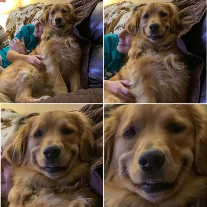 O sorriso de Waffle fez sucesso na internet. (Foto: Facebook/Caitlin Carlia Weakley via Dogspotting Society)
