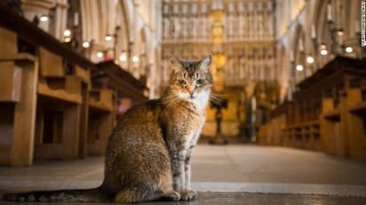 A gatinha Doorkins Magnificat, fez da Catedral o seu lar. (Foto: Bridget Davey)