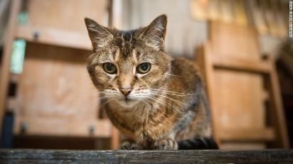 A gatinha explorou cada canto da Catedral, fez amizade com os fiéis, deixou a sua marca no local. (Foto: Bridget Davey)