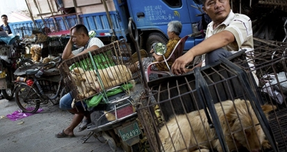 Ativistas, estudantes e ONGs têm pressionado o regime chinês a aprovar leis contra a crueldade aos animais. (Foto: AP Photo/ Andy Wong)