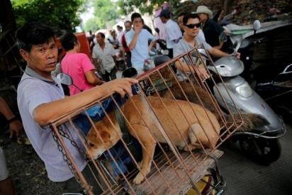 Um vendedor espera compradores ao lado de cachorros em uma gaiola em um mercado na cidade de Yulin, província de Guangxi, no sul da China, 2016. (Foto: EPA / WU HONG)