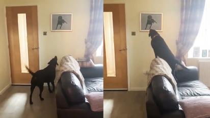 Cão se emociona ao ver retrato de irmão canino falecido. (Foto: Libby Frances Davey)