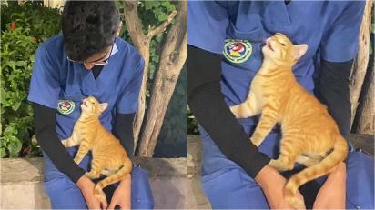 Enfermeiro cansado após 12 horas de plantão recebe conforto e carinho de gatinha de rua. (Foto: Arquivo Pessoal/Ahmed Flaty)