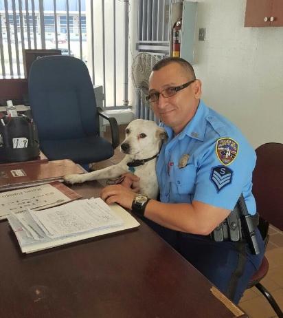 O trabalho do Gorgi é dar e receber carinho dos policiais. (Foto: Policía de Puerto Rico)