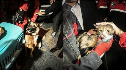 Cão farejador encontra gato que ficou 30 horas soterrado por escombros de prédio desabado. (Foto: Reprodução/Hurriyet)