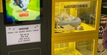 Na máquina haviam 14 filhotes entre cães e gatos. (Foto: Weibo/Ju Xiaowen)