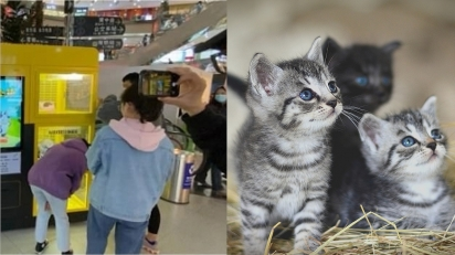 Shopping instala máquina de jogos que oferece filhotes vivos como brindes na China. (Foto: Weibo/Ju Xiaowen | gatos ilustrativos/Pixabay)