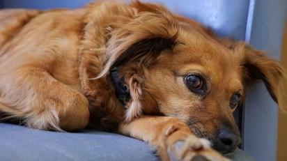 A disbiose intestinal pode causar ansiedade e depressão no animal de estimação. (Foto: Divulgação/Pixabay)
