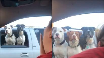 Mulher filma cães na janela de carro parado em sinaleira e se surpreende quando um terceiro cão aparece na filmagem. (Foto: Reprodução/ViralHog.com)