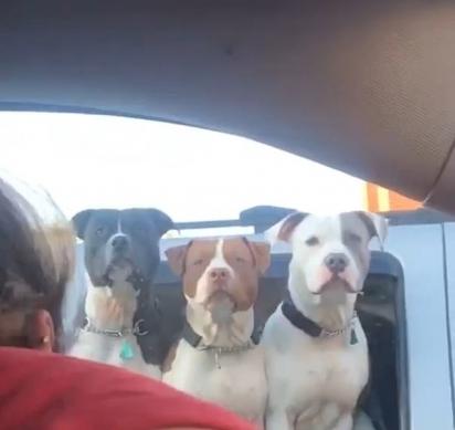 Durante a filmagem um terceiro cão aparece, deixando a mulher ainda mais entusiasmada. (Foto: Reprodução/ViralHog.com)