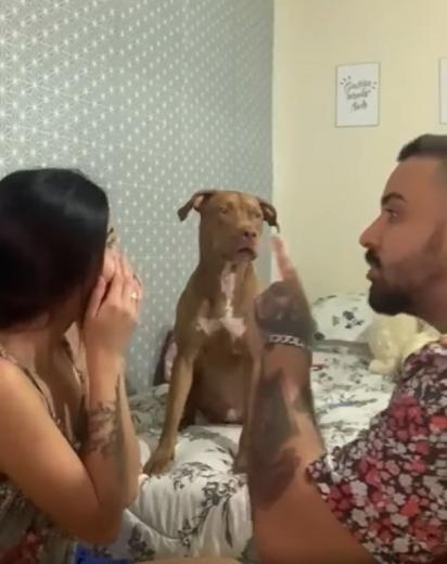 Casal simula briga e cão pit bull defende a sua dona. (Foto: Arquivo Pessoal/Andreza Albuquerque)
