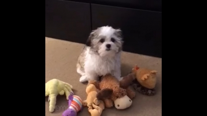A resposta do cãozinho foi sempre a mesma, o alce de pelúcia. (Foto: Instagram/heyyybenji)