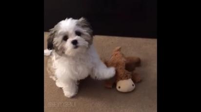 Na primeira pergunta o cãozinho aponta seu alce de pelúcia. (Foto: Instagram/heyyybenji)