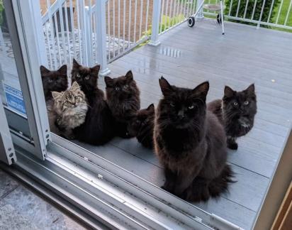 A gata levou todos os seus filhotes para apresentar à mulher. (FOTO: CHATONS ORPHELINS MONTREAL)
