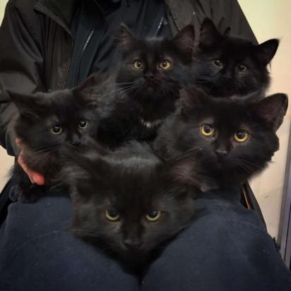 Os filhotinhos são bem parecidos com a gata. (FOTO: CHATONS ORPHELINS MONTREAL)