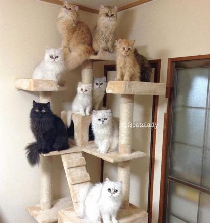 Raramente os gatinhos brigam entre si. (Foto: Instagram/12catslady)