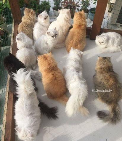 Eles são muito curiosos. (Foto: Instagram/12catslady)