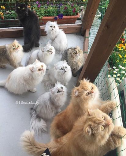 Não é fácil reunir a turminha toda numa foto. (Foto: Instagram/12catslady)