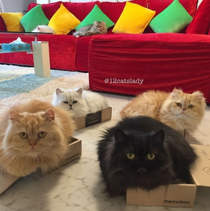 Adoram deitar dentro de uma caixa. (Foto: Instagram/12catslady)