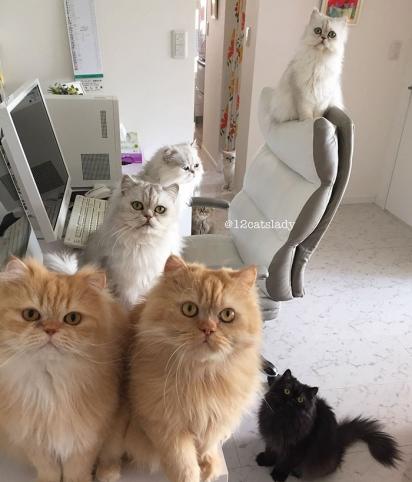Eles adoram posar para uma foto. (Foto: Instagram/12catslady)