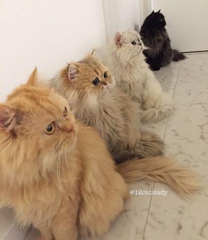 Sempre estão prestando atenção em alguma coisa. (Foto: Instagram/12catslady)