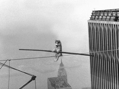 Husky equilibrista. (Foto: Reddit/Blokatt)