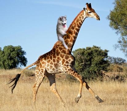Montado numa girafa. (Foto: Reddit/abcakaalex)