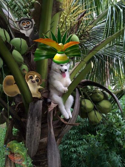 Todos saúdam o rei Julien, da franquia Madagascar. (Foto: Reddit/bthundergun)