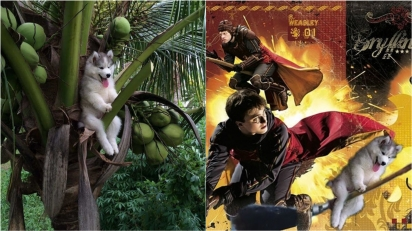 Foto de filhote de Husky preso em coqueiro vira combustível para os memes mais hilários. (Foto:  Reproduçã/9gag | Reddit/NihiloEx)