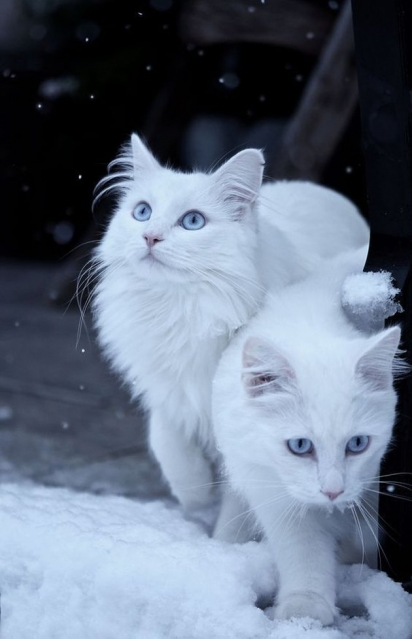 Bolinhas de neve. (Foto: Reddit/VastCase)