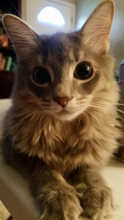 Impossível dizer 'não' a esse gatinho. (Foto: Reddit/Sophiecatsmom)