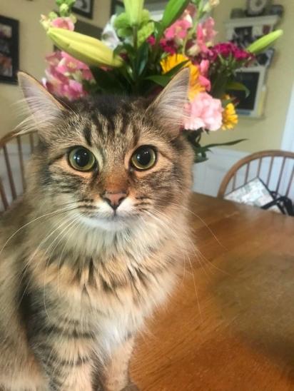 As flores são bonitas, mas não têm chance contra este gatinho. (Foto: Reddit/guildes)