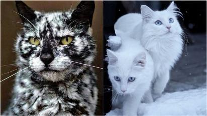 Esses gatos são tão bonitos que poderiam facilmente serem supermodelos. (Foto: Instagram/seniorscrappy   Reddit/VastCase)