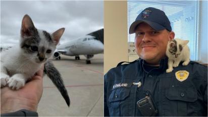Gatinho perdido em aeroporto é dotado por funcionário. (Foto: Twitter/@FlyLouisville)