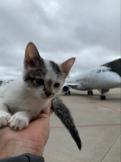 O gatinho foi encontrado do lado de fora na rampa do terminal do aeroporto. (Foto: Twitter/@FlyLouisville)