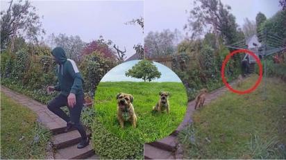 Entregador da Amazon se assusta com filhotes de border terriers e sai correndo. (Foto: Arquivo Pessoal/Katy Ringsdore)
