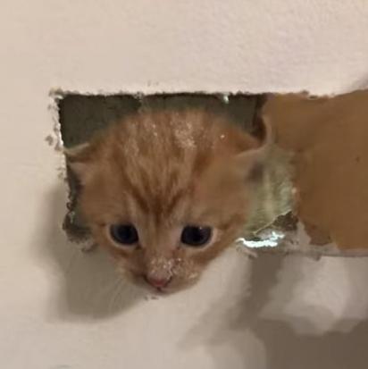 Os bombeiros realizaram um delicado resgate depois que um gatinho ruivo foi preso atrás de uma parede miando por ajuda