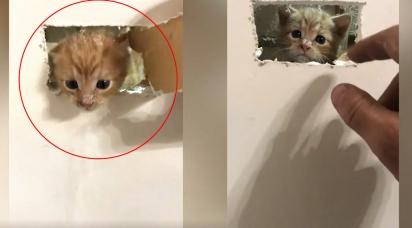 Gatinho minúsculo é resgatado de dentro de parede e família dona do imóvel decide adotá-lo