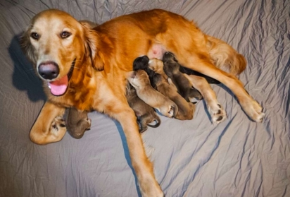 Lily deu à luz a 8 filhotes. (FOTO: INSTAGRAM / CAITIESFOSTERFAM)