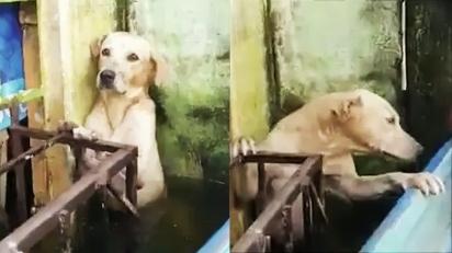 Cão de rua abandonado em enchente é encontrado com o olhar mais triste. (Foto: Twitter @SEMAR_mx)