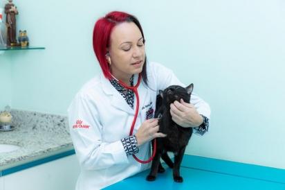 Vanessa Zimbres, veterinária especialista em medicina felina. (Foto: Arquivo pessoal)