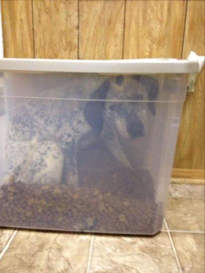 Brandy Stenzel encontrou a sua cadelinha dentro da caixa de ração. (Foto: Arquivo Pessoal/Brandy Stenzel)