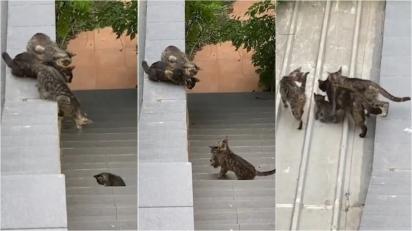 Gatos se unem para ajudar filhote a subir muro. (Foto: Reprodução/NewsFlare)
