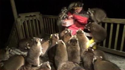 James Blackwood alimenta guaxinins na varanda de sua casa. (Foto: Reprodução Youtube/James Blackwood - Raccoon Whisperer)