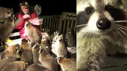 Homem atende o ultimo pedido da esposa falecida e cuida de guaxinins. (Foto: Reprodução Youtube/James Blackwood - Raccoon Whisperer)