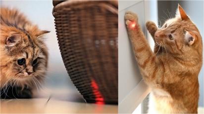 Gatos adoram perseguir a luz do laser e a ciência explica. (Foto: Divulgação/vetstreet)