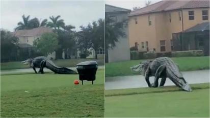 Jacaré gigante é visto atravessando campo de golfe na Flórida. (Foto: Reprodução Youtube/Yournumber1)