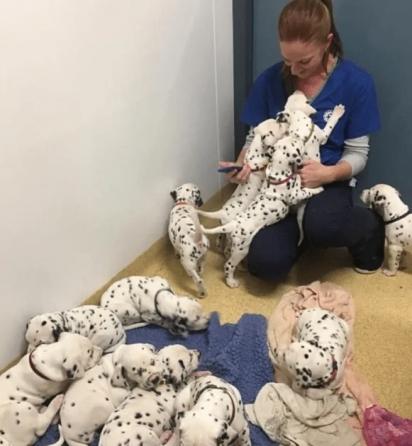 Foram 18 filhotes: 12 cadelas e 6 cães. (Foto: Cecilia Langton-Bunkergot)